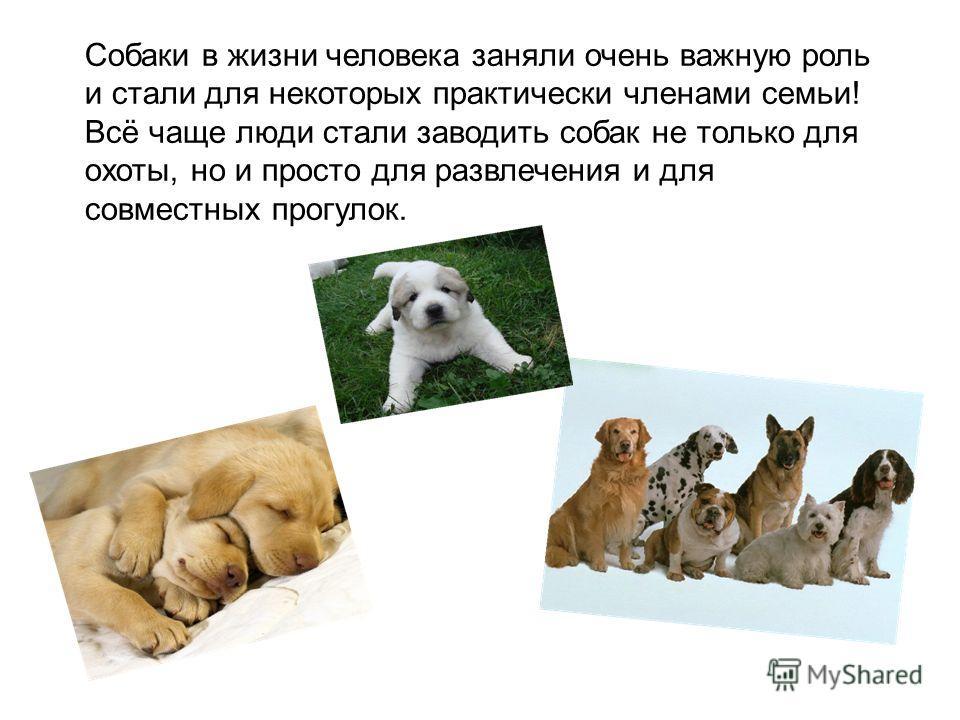 Собаки в жизни человека заняли очень важную роль и стали для некоторых практически членами семьи! Всё чаще люди стали заводить собак не только для охоты, но и просто для развлечения и для совместных прогулок.