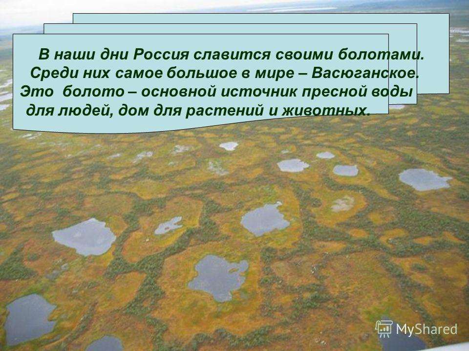 В наши дни Россия славится своими болотами. Среди них самое большое в мире – Васюганское. Это болото – основной источник пресной воды для людей, дом для растений и животных.