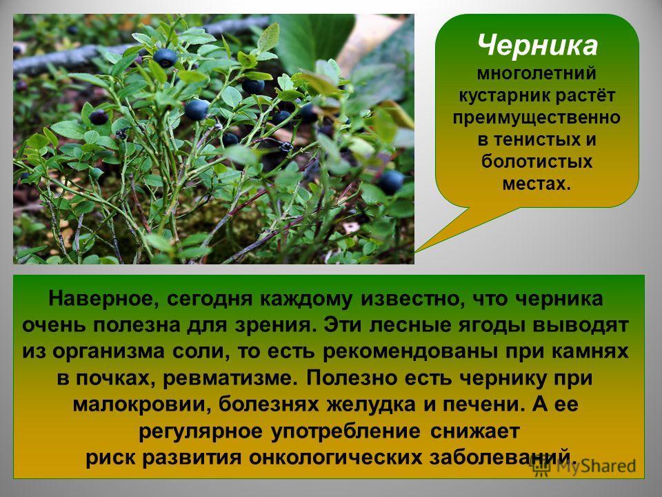 Черника многолетний кустарник растёт преимущественно в тенистых и болотистых местах. В чернике содержатся витамины группы B, PP и C, каротин, сахар, органические кислоты, микроэлементы, эфирное масло. По мнению ученых, черника – абсолютный лидер по с
