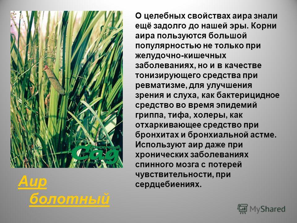 Аир болотный О целебных свойствах аира знали ещё задолго до нашей эры. Корни аира пользуются большой популярностью не только при желудочно-кишечных заболеваниях, но и в качестве тонизирующего средства при ревматизме, для улучшения зрения и слуха, как