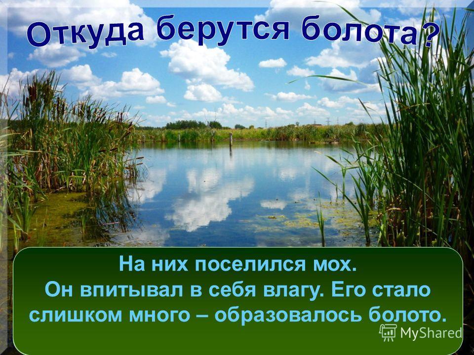 На месте болота могло быть небольшое озерцо или лесная речушка. Стебли у растений водоёма переплетались. На них поселился мох. Он впитывал в себя влагу. Его стало слишком много – образовалось болото.