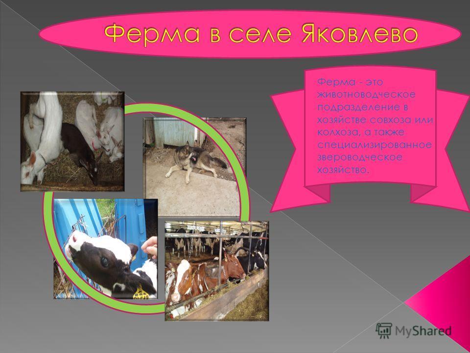 Ферма - это животноводческое подразделение в хозяйстве совхоза или колхоза, а также специализированное звероводческое хозяйство.