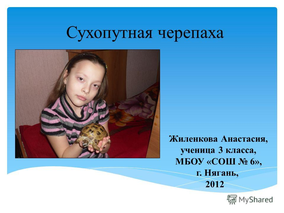 Сухопутная черепаха Жиленкова Анастасия, ученица 3 класса, МБОУ «СОШ 6», г. Нягань, 2012