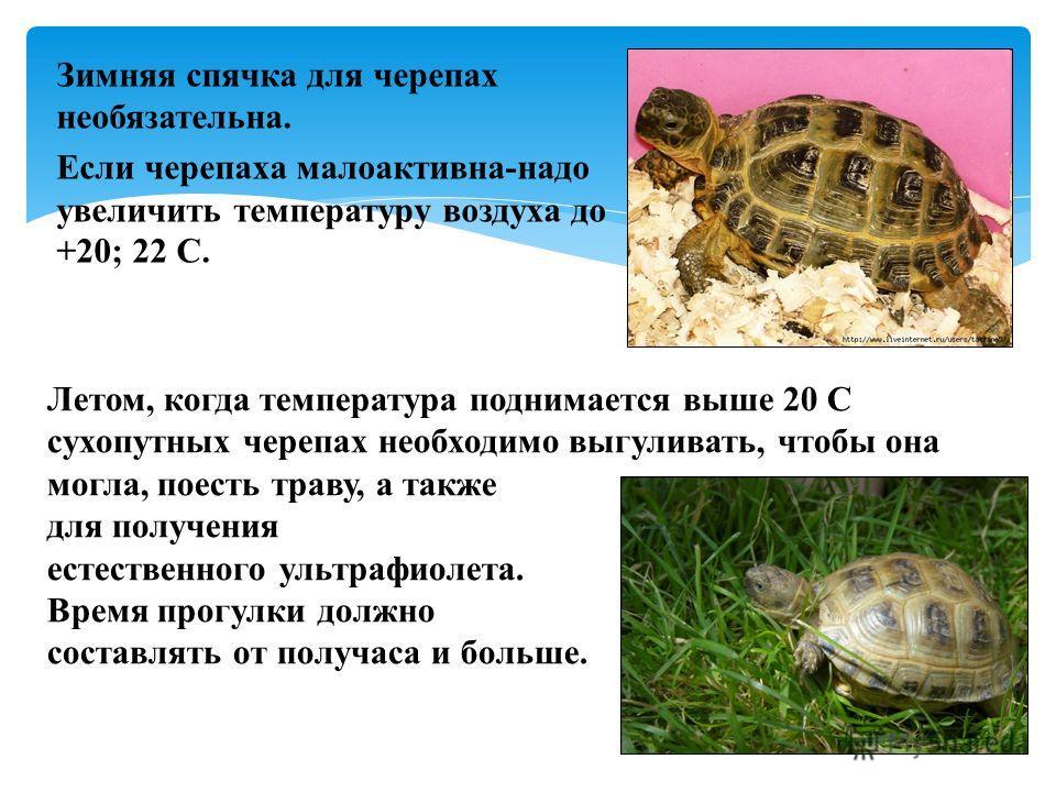 Про сухопутную черепаху в домашних условиях 433