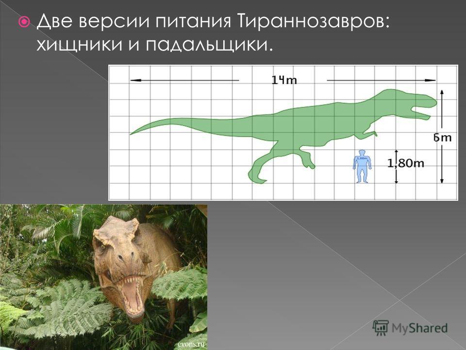 Две версии питания Тираннозавров: хищники и падальщики.