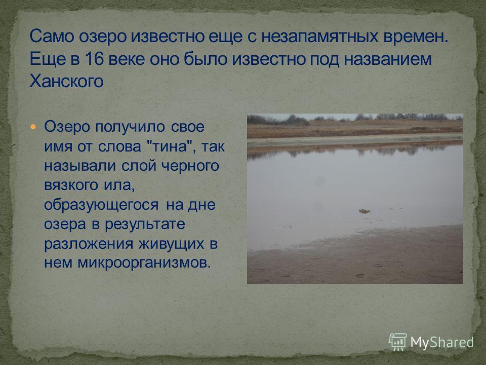 Озеро получило свое имя от слова тина, так называли слой черного вязкого ила, образующегося на дне озера в результате разложения живущих в нем микроорганизмов.