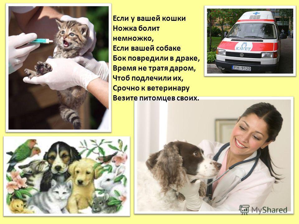 Если у вашей кошки Ножка болит немножко, Если вашей собаке Бок повредили в драке, Время не тратя даром, Чтоб подлечили их, Срочно к ветеринару Везите питомцев своих.