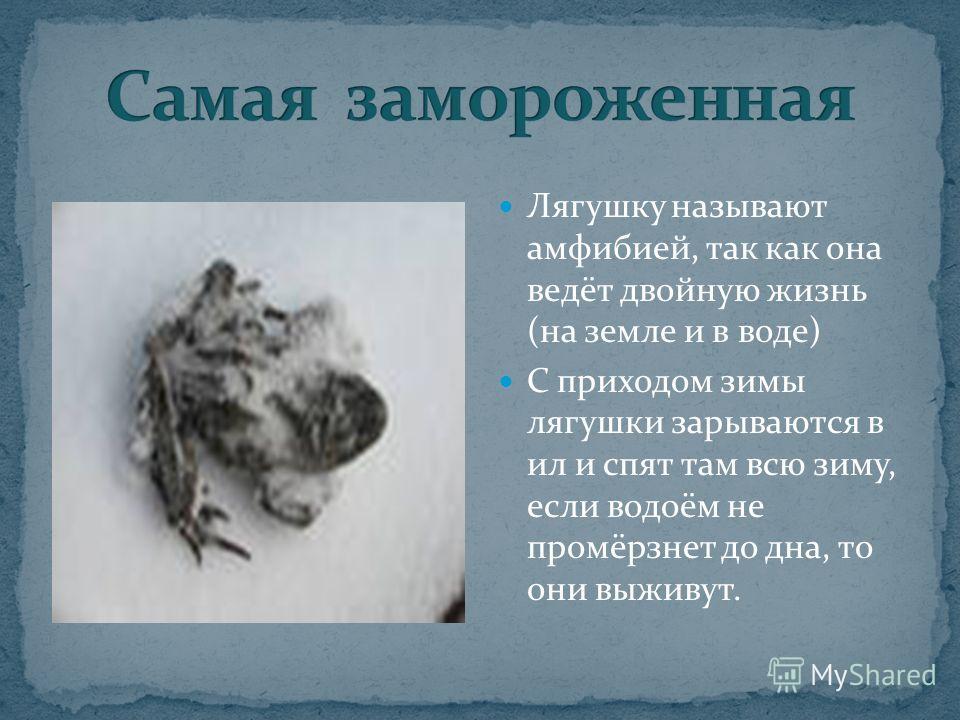 Лягушку называют амфибией, так как она ведёт двойную жизнь (на земле и в воде) С приходом зимы лягушки зарываются в ил и спят там всю зиму, если водоём не промёрзнет до дна, то они выживут.