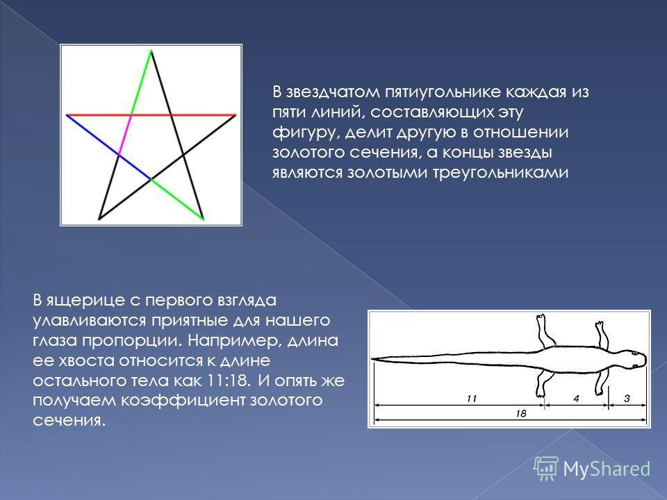 В звездчатом пятиугольнике каждая из пяти линий, составляющих эту фигуру, делит другую в отношении золотого сечения, а концы звезды являются золотыми треугольниками В ящерице с первого взгляда улавливаются приятные для нашего глаза пропорции. Наприме