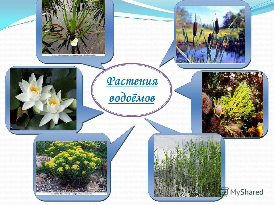 Растения водоёмов