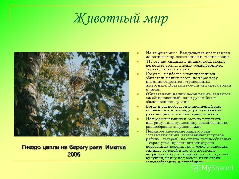 Животный мир На территории с. Вандышевка представлен животный мир лесостепной и степной зоны. Из отряда хищных в наших лесах можно встретить волка, лисицу обыкновенную, хорька, ласку, барсука. Косуля – наиболее многочисленный обитатель наших лесов, п