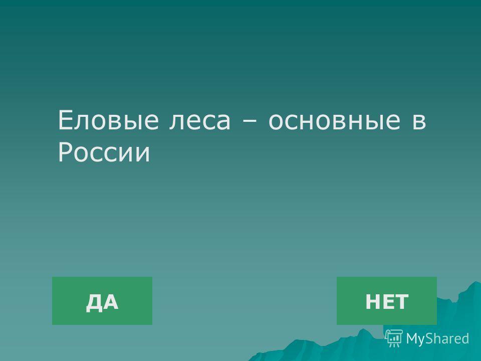 ДАНЕТ Еловые леса – основные в России