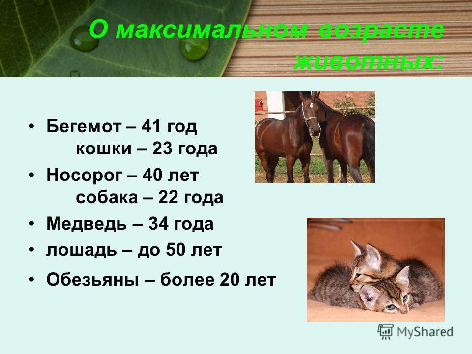 О максимальном возрасте животных: Бегемот – 41 год кошки – 23 года Носорог – 40 лет собака – 22 года Медведь – 34 года лошадь – до 50 лет Обезьяны – более 20 лет