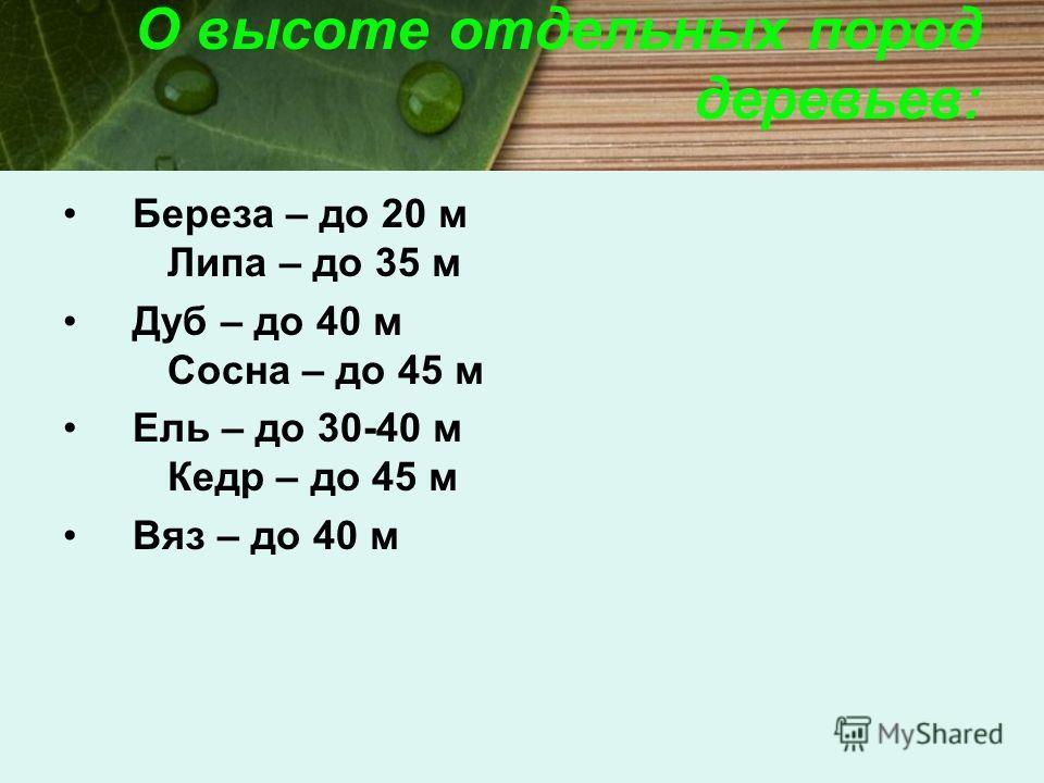О высоте отдельных пород деревьев: Береза – до 20 м Липа – до 35 м Дуб – до 40 м Сосна – до 45 м Ель – до 30-40 м Кедр – до 45 м Вяз – до 40 м