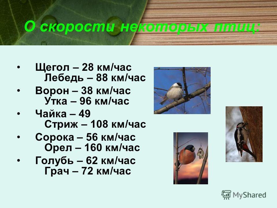 О скорости некоторых птиц: Щегол – 28 км/час Лебедь – 88 км/час Ворон – 38 км/час Утка – 96 км/час Чайка – 49 Стриж – 108 км/час Сорока – 56 км/час Орел – 160 км/час Голубь – 62 км/час Грач – 72 км/час