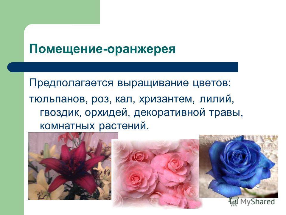 Помещение-оранжерея Предполагается выращивание цветов: тюльпанов, роз, кал, хризантем, лилий, гвоздик, орхидей, декоративной травы, комнатных растений.