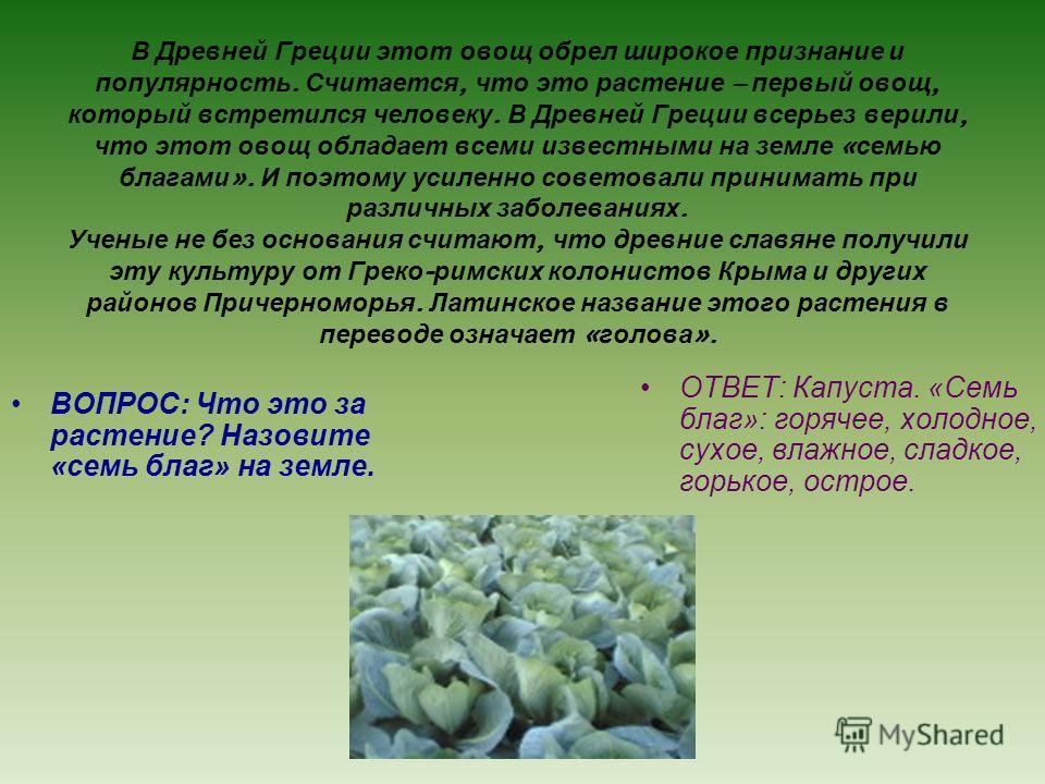 В Древней Греции этот овощ обрел широкое признание и популярность. Считается, что это растение – первый овощ, который встретился человеку. В Древней Греции всерьез верили, что этот овощ обладает всеми известными на земле « семью благами ». И поэтому