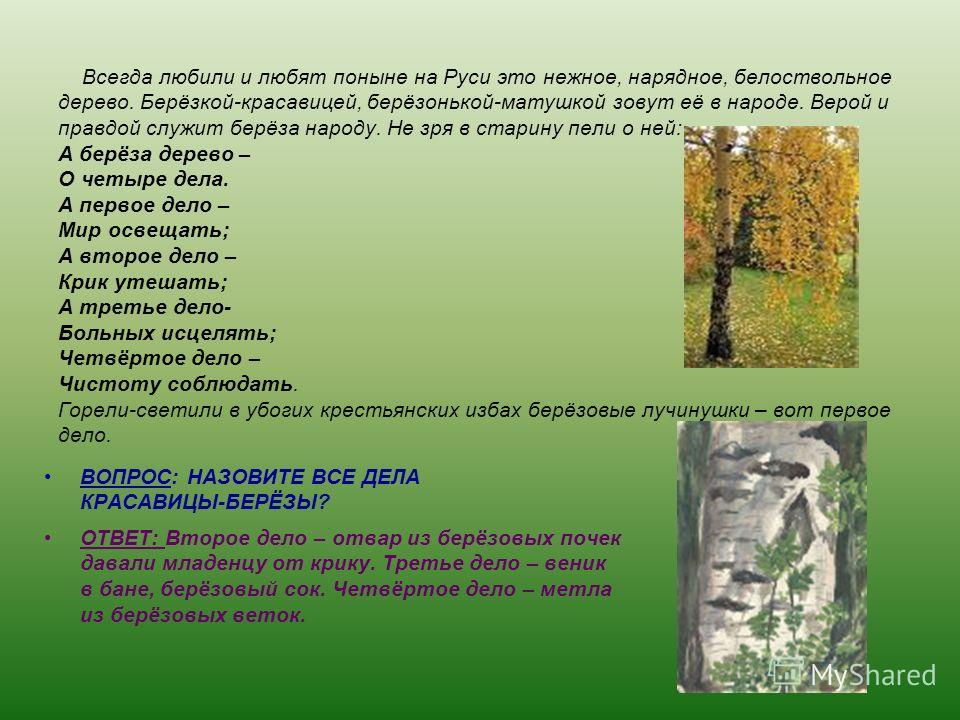 Всегда любили и любят поныне на Руси это нежное, нарядное, белоствольное дерево. Берёзкой-красавицей, берёзонькой-матушкой зовут её в народе. Верой и правдой служит берёза народу. Не зря в старину пели о ней: А берёза дерево – О четыре дела. А первое
