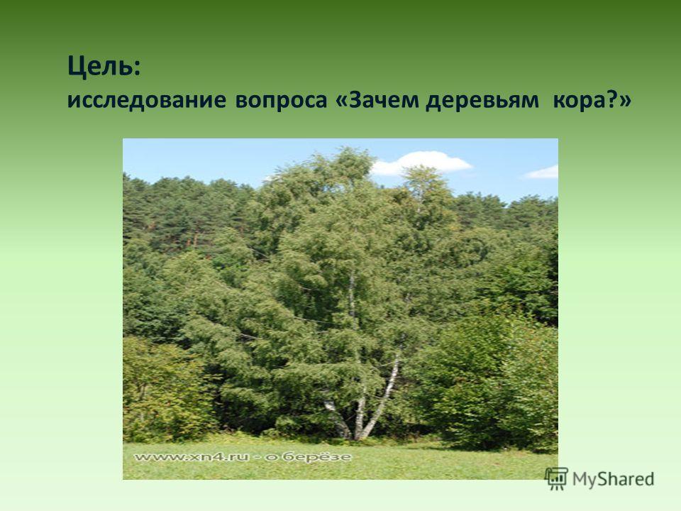 Цель: исследование вопроса «Зачем деревьям кора?»