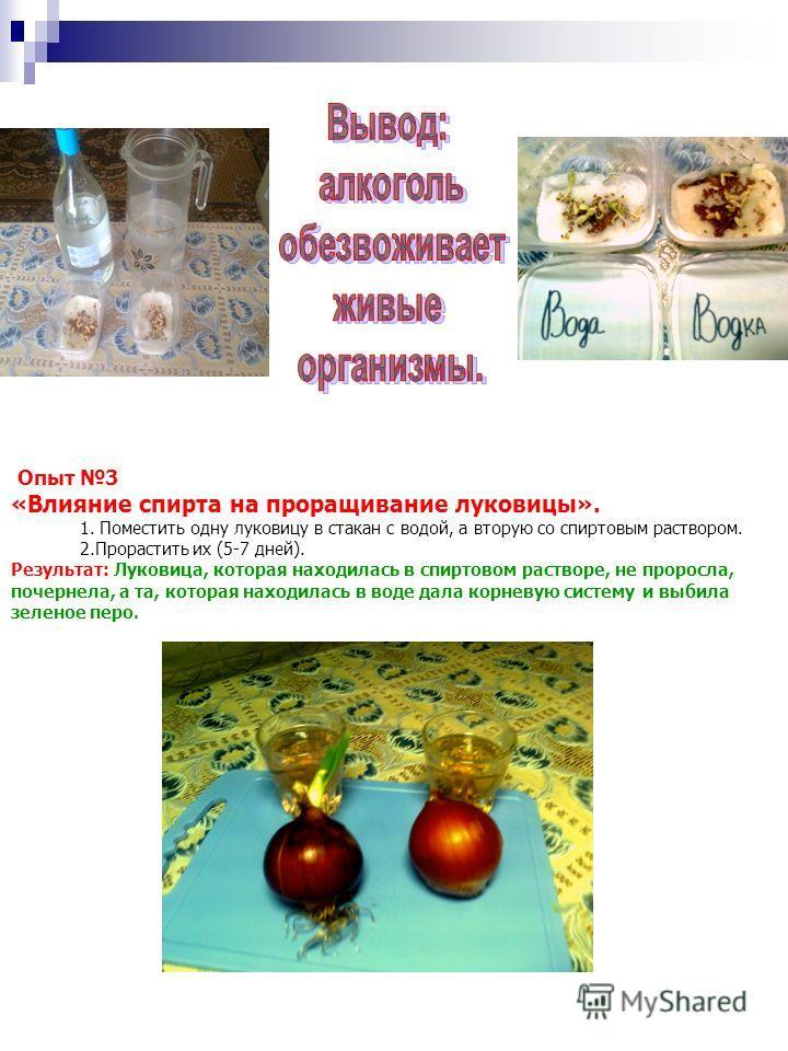 Опыт 3 «Влияние спирта на проращивание луковицы». 1. Поместить одну луковицу в стакан с водой, а вторую со спиртовым раствором. 2.Прорастить их (5-7 дней). Результат: Луковица, которая находилась в спиртовом растворе, не проросла, почернела, а та, ко
