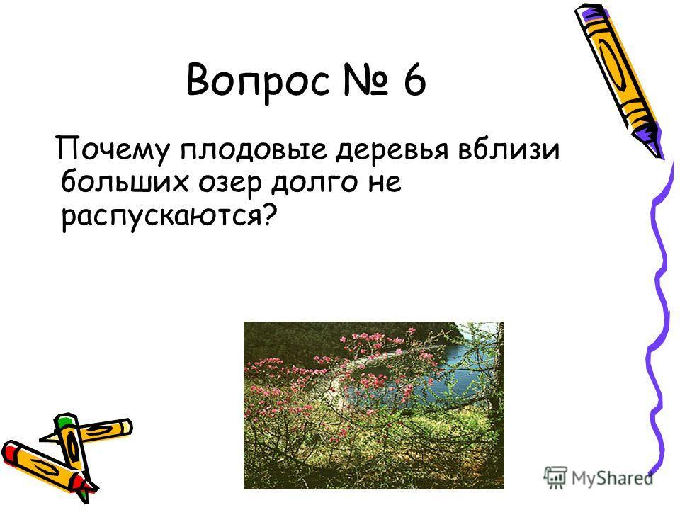 Вопрос 6 Почему плодовые деревья вблизи больших озер долго не распускаются?