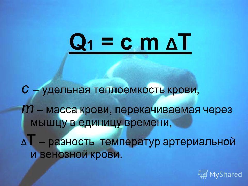 Q 1 = c m Δ T с – удельная теплоемкость крови, т – масса крови, перекачиваемая через мышцу в единицу времени, Δ T – разность температур артериальной и венозной крови.