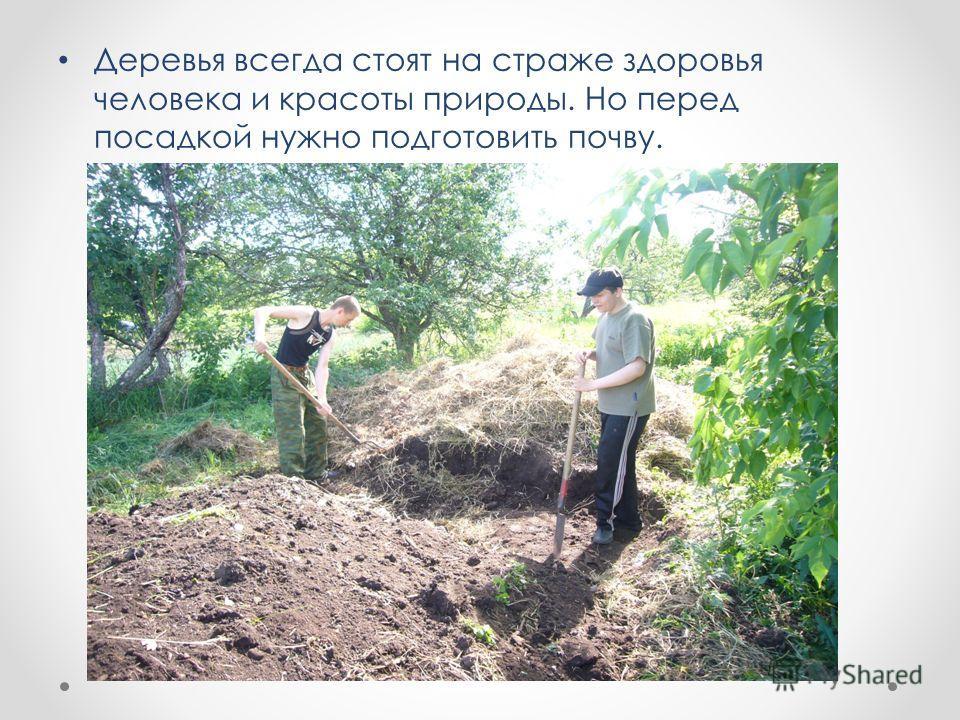 Деревья всегда стоят на страже здоровья человека и красоты природы. Но перед посадкой нужно подготовить почву.