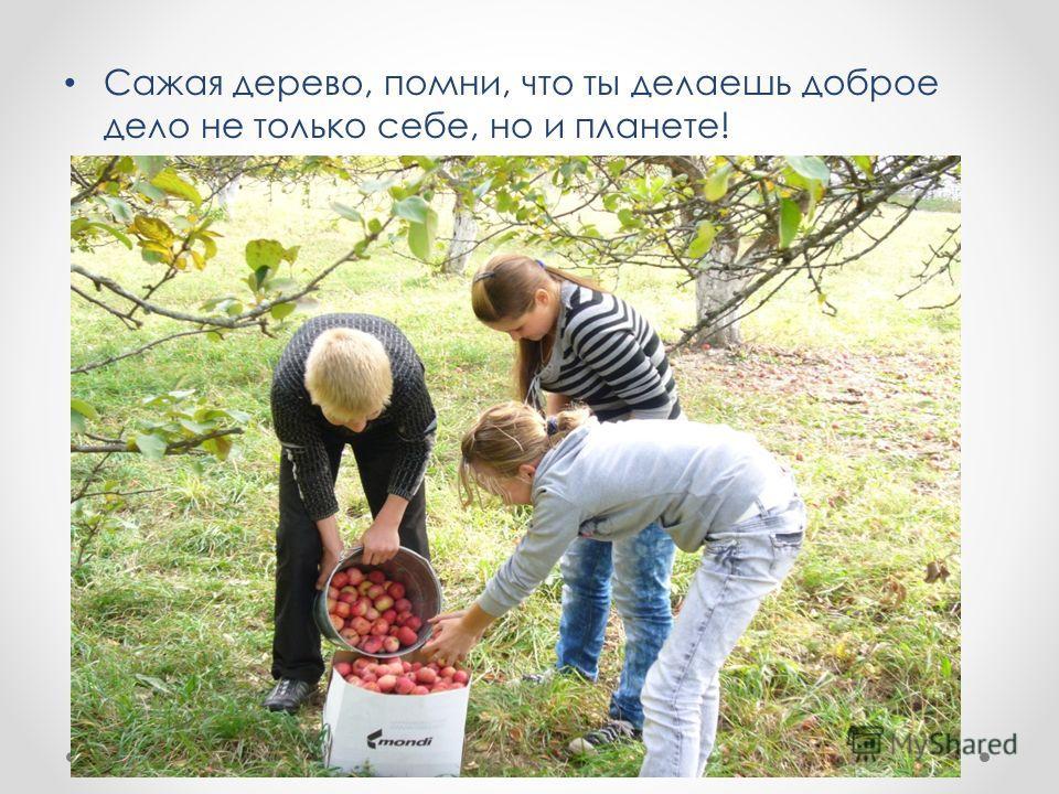 Сажая дерево, помни, что ты делаешь доброе дело не только себе, но и планете!