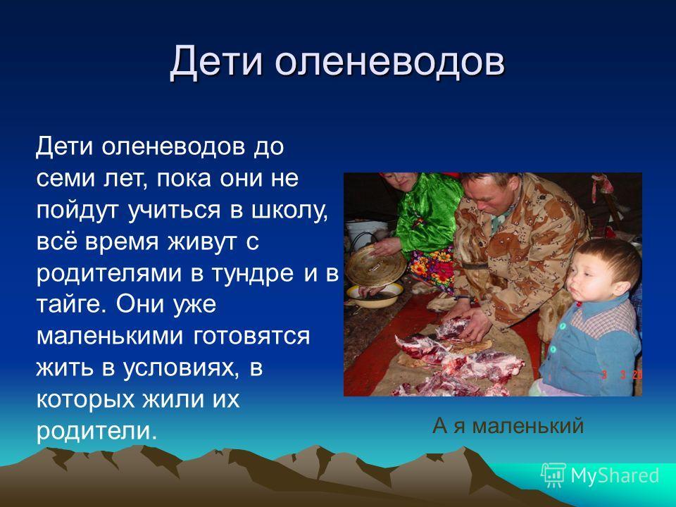 Дети оленеводов Дети оленеводов до семи лет, пока они не пойдут учиться в школу, всё время живут с родителями в тундре и в тайге. Они уже маленькими готовятся жить в условиях, в которых жили их родители. А я маленький
