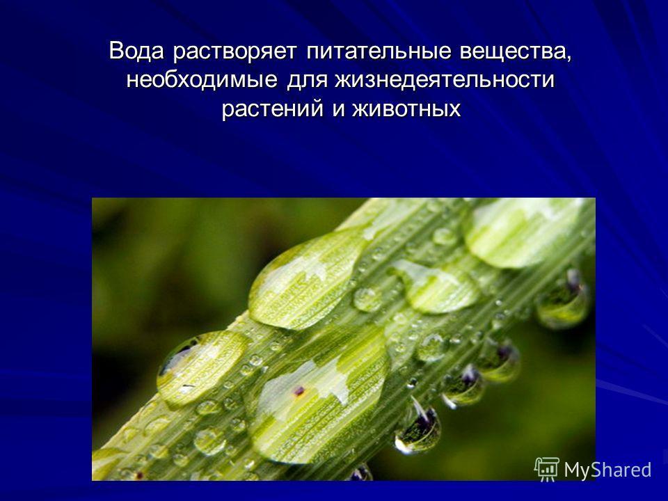 Вода растворяет питательные вещества, необходимые для жизнедеятельности растений и животных
