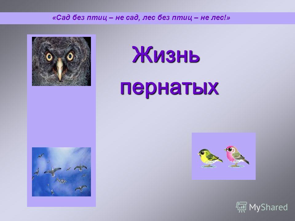 Жизнь пернатых пернатых «Сад без птиц – не сад, лес без птиц – не лес!»