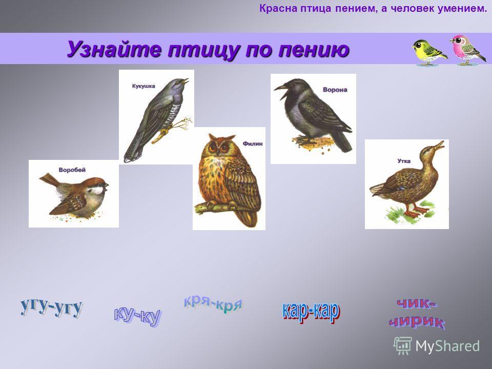 Узнайте птицу по пению Узнайте птицу по пению Красна птица пением, а человек умением.