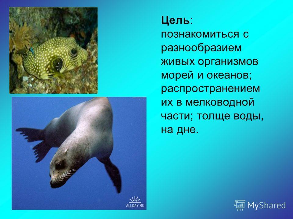 Цель: познакомиться с разнообразием живых организмов морей и океанов; распространением их в мелководной части; толще воды, на дне.