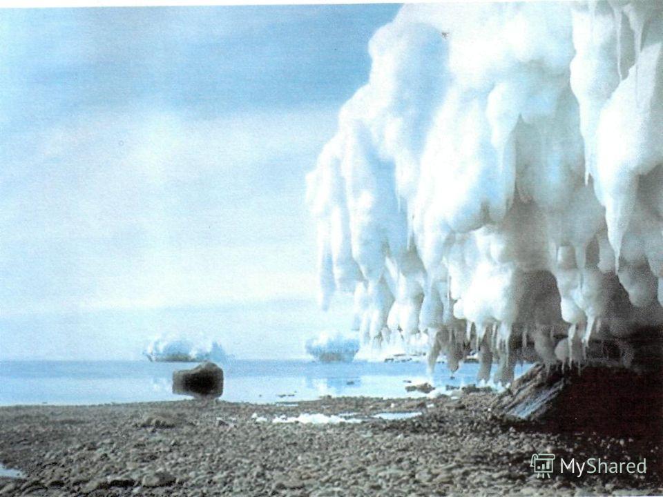АНТАРКТИЧЕСКАЯ ПУСТЫНЯ – мхи, лишайники, водоросли макроцистис. ЖИЗНЬ океан, планктон. ПИНГВИНЫ, БУРЕВЕСТНИКИ, ПОМОРНИКИ, КИТЫ, ТЮЛЕНИ, БЕЛАЯ ЩУКА (ЛЕДЯНАЯ), МАКРУРУС, ПУТАССУ, МРАМОРНАЯ НОТОТЕНИЯ, КАЛЬМАРЫ, АЛЬБАТРОСЫ.