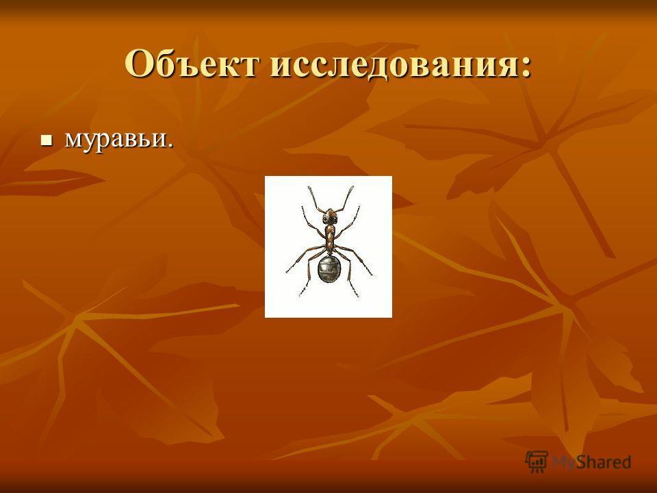 Объект исследования: муравьи. муравьи.