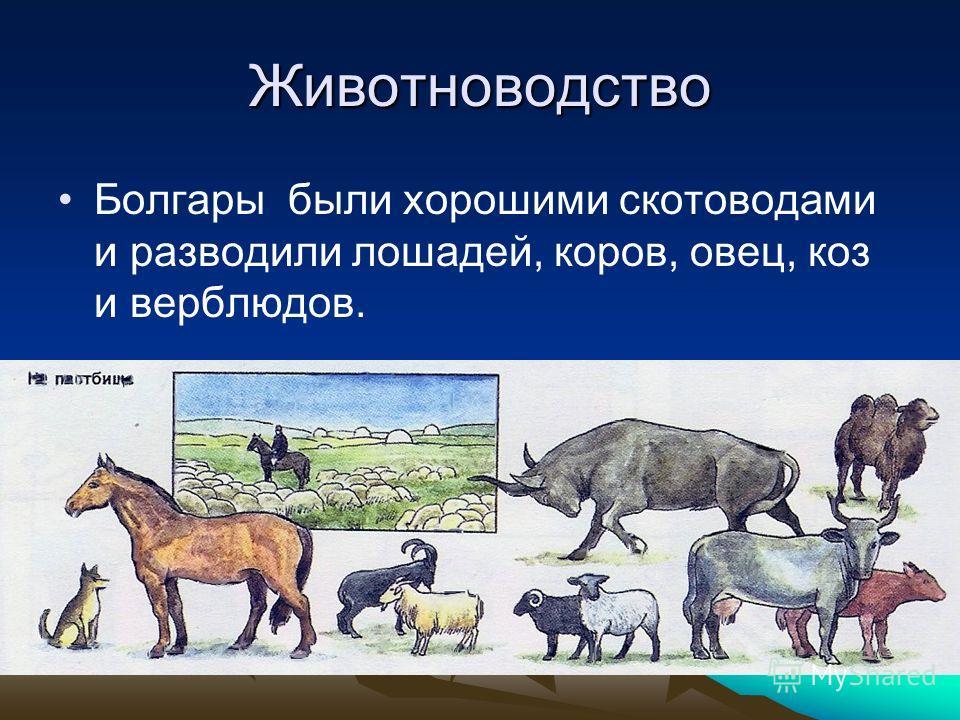 Животноводство Болгары были хорошими скотоводами и разводили лошадей, коров, овец, коз и верблюдов.