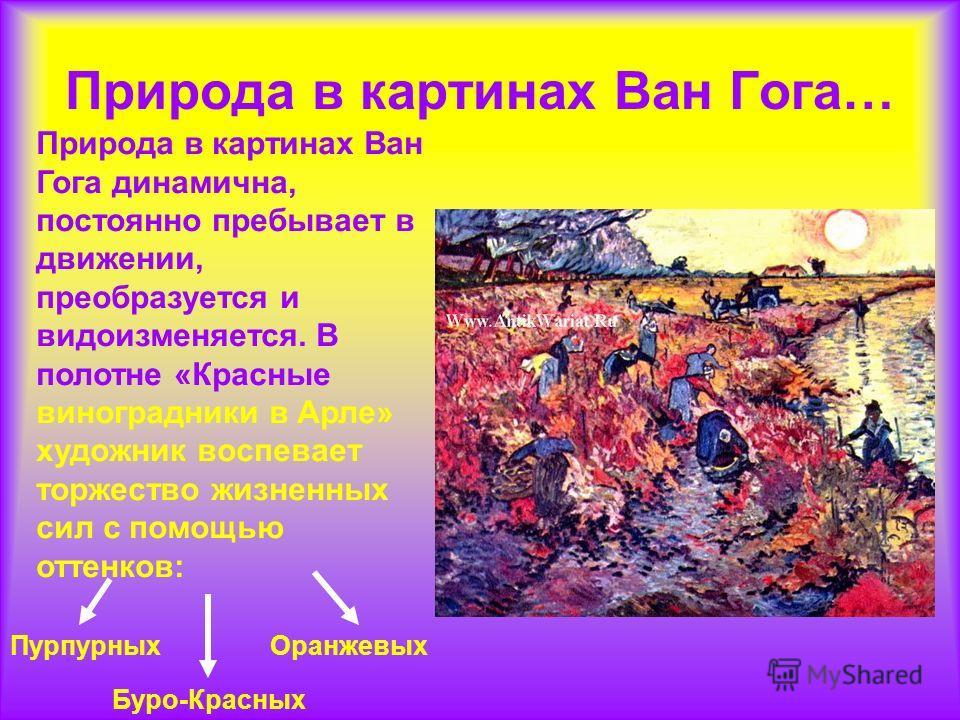 Природа в картинах Ван Гога… Природа в картинах Ван Гога динамична, постоянно пребывает в движении, преобразуется и видоизменяется. В полотне «Красные виноградники в Арле» художник воспевает торжество жизненных сил с помощью оттенков: Пурпурных Буро-