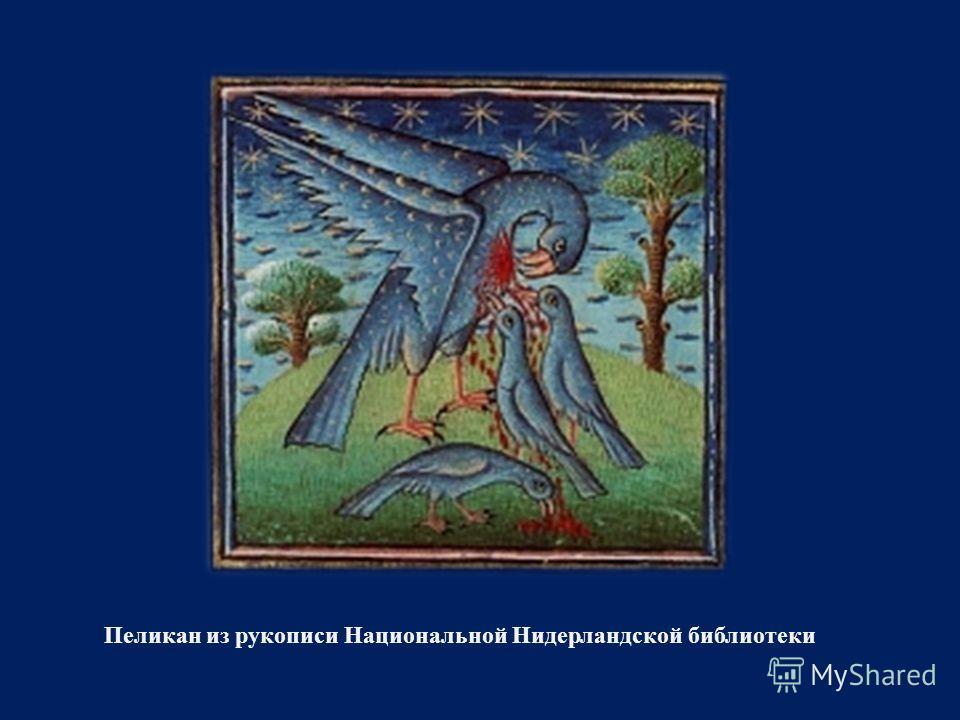 Пеликан из рукописи Национальной Нидерландской библиотеки