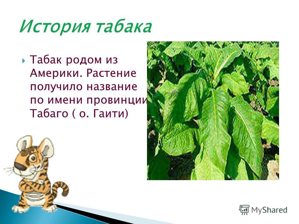 Табак родом из Америки. Растение получило название по имени провинции Табаго ( о. Гаити)
