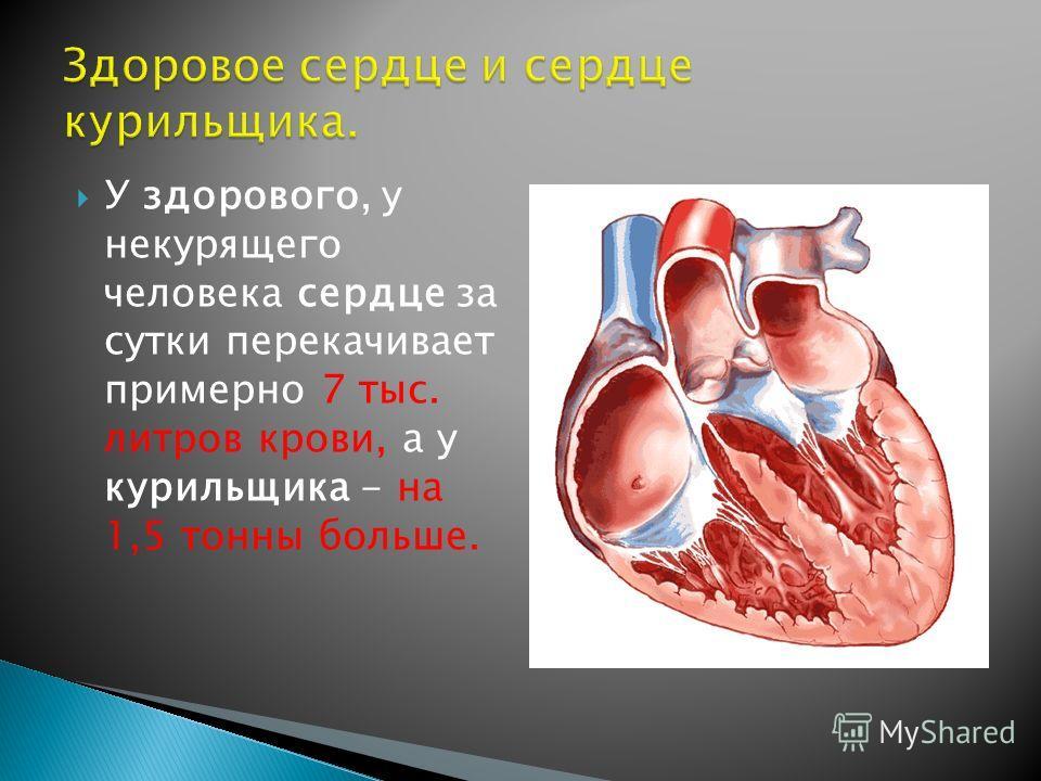 У здорового, у некурящего человека сердце за сутки перекачивает примерно 7 тыс. литров крови, а у курильщика - на 1,5 тонны больше.