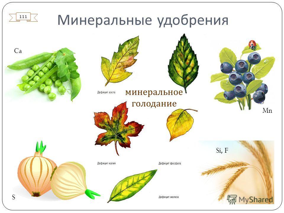 Минеральные удобрения Mn S Si, F Ca минеральное голодание 111