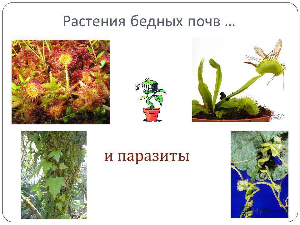 Растения бедных почв … и паразиты