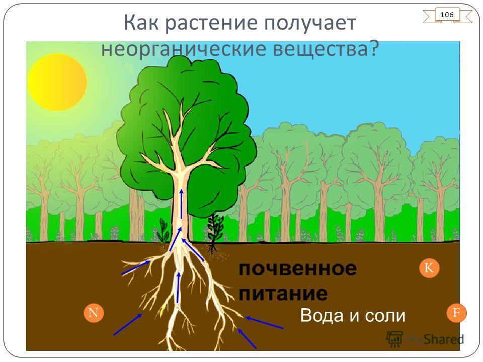 106 Вода и соли N K F Как растение получает неорганические вещества ?