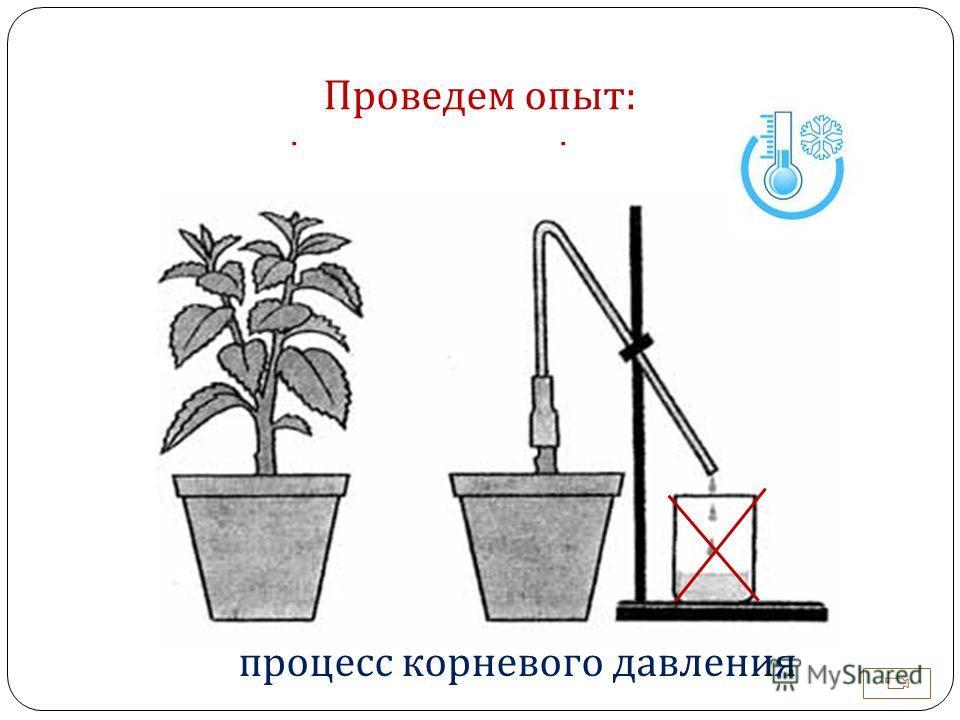 Как нужные вещества попадают в верхнюю часть растения ? Проведем опыт : процесс корневого давления