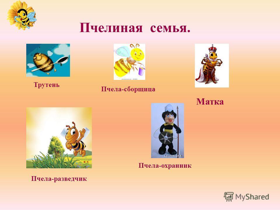 История пчелы. Ученые считают, что пчелы на Земле появились на 50-60 тыс. лет ранее человека в Южной Азии, откуда они распространились повсеместно. Пчел всегда считали большой загадкой и стремились к их обожествлению: древние греки и римляне считали,