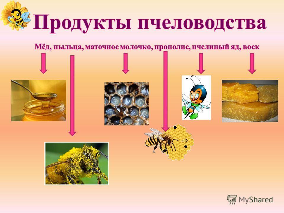 молодаязрелая старая чистильщица ячеек пчела – кормилица пчела - приёмщица корма пчела - уборщица, санитар пчела - строительница пчела – сторож пчела – сборщица пчела – разведчица пчёла – водонос