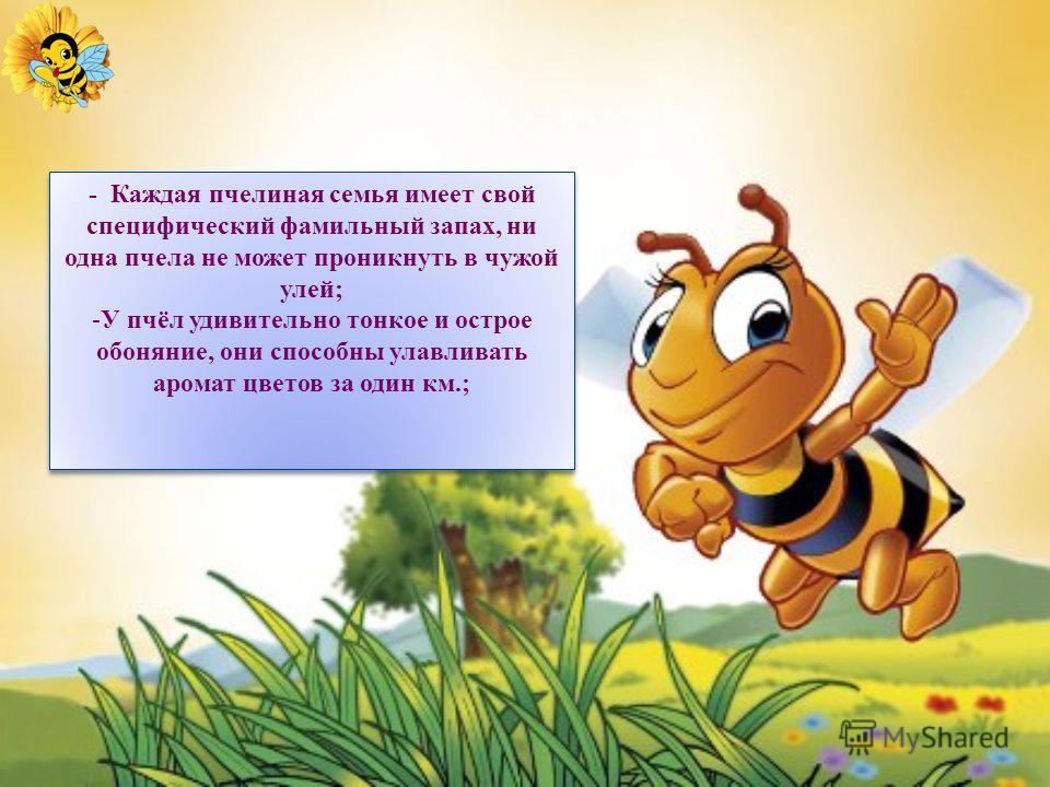 Мед – просто кладезь полезных для организма веществ, он и очищает, и питает, и заряжает энергией. Можно даже сказать, что мед - эликсир здоровья и долголетия.
