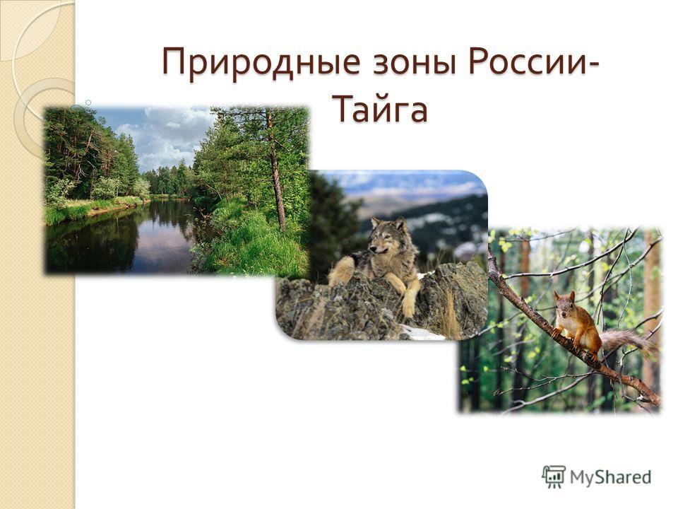 Природные зоны россии тайга