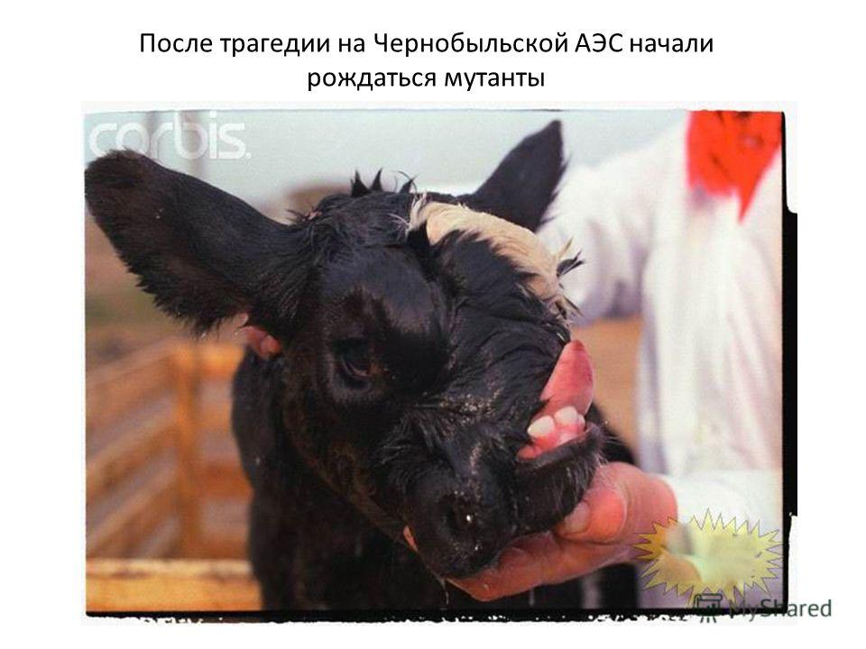 картинки чернобыля после взрыва мутанты