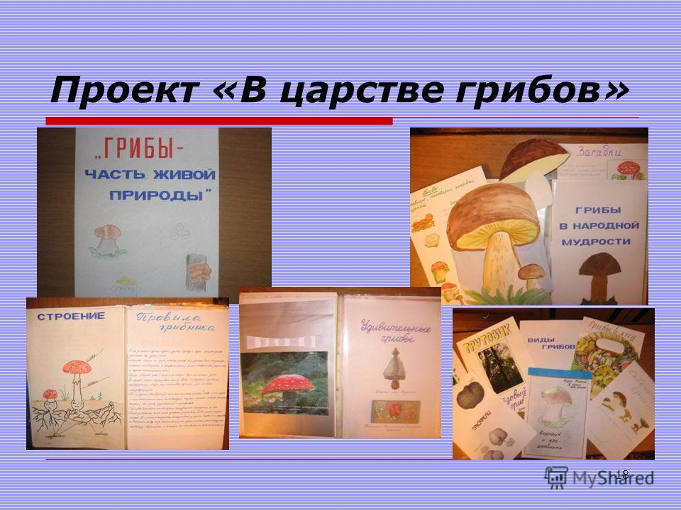 Проект «В царстве грибов» 18